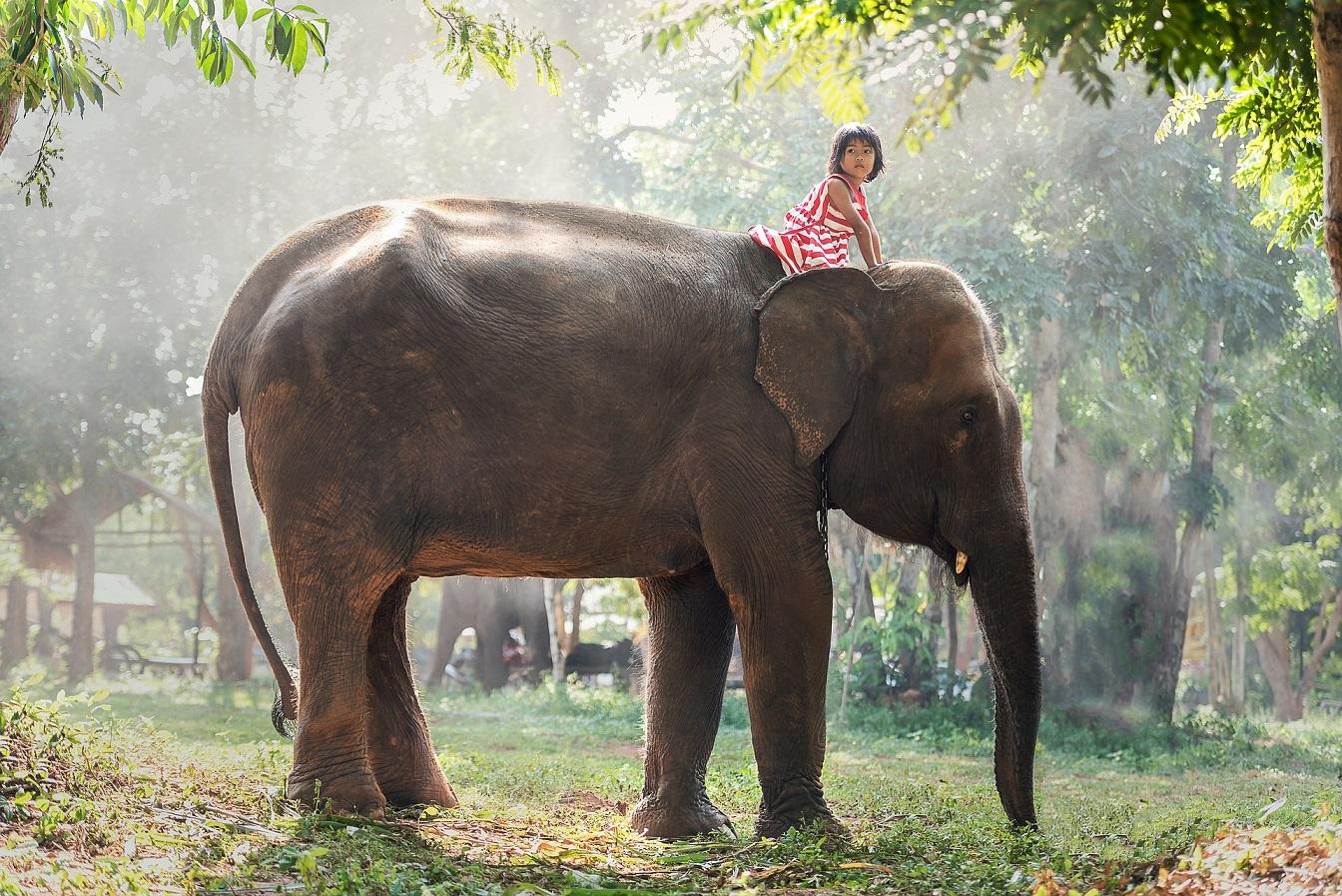 Słonie w Tajlandii-wycieczka objazdowa z biurem podróży OdraTravel w Szczecinie.