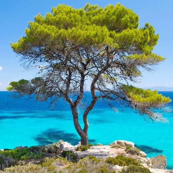 drzewo na tle jasno błękitnego morza